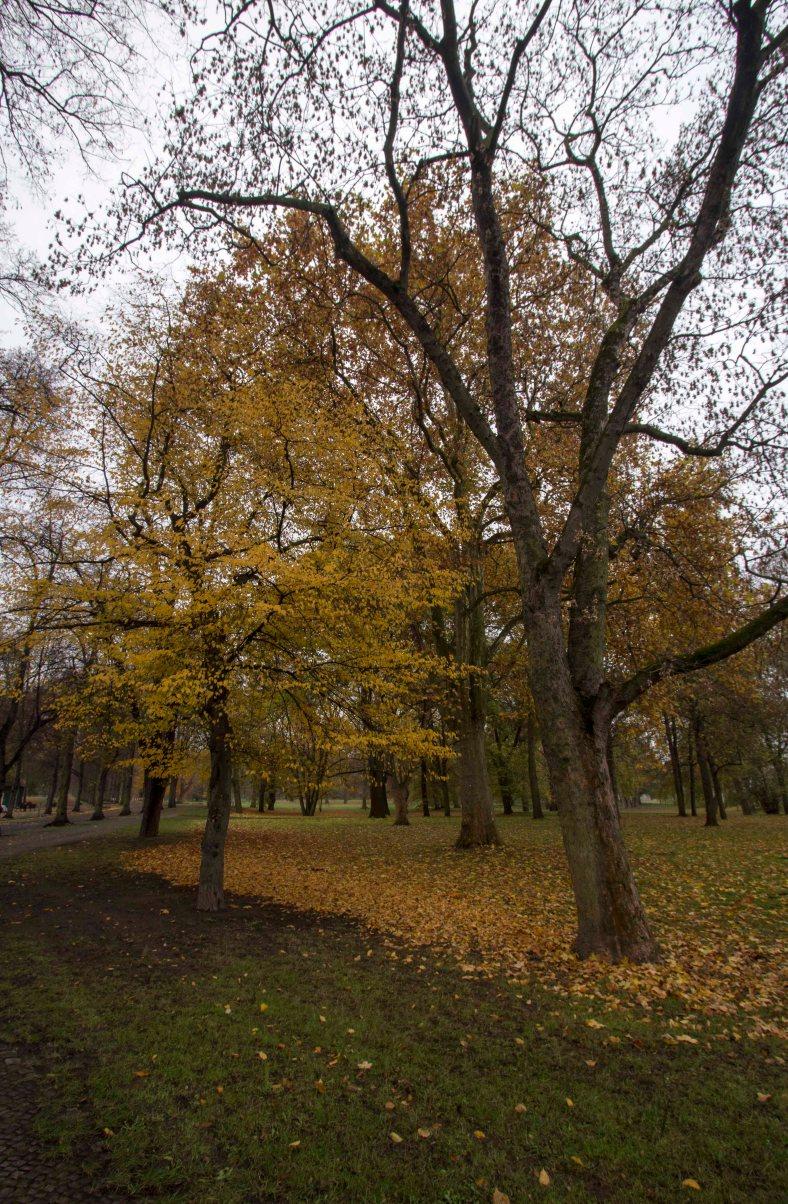 albin-muller-turm-und-park_3
