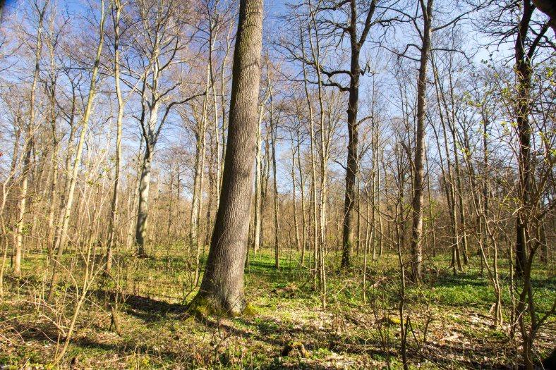 Auenwald einzeln