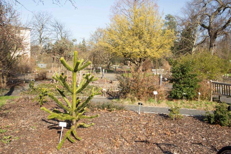 Leipziger Botanischer Garten_1