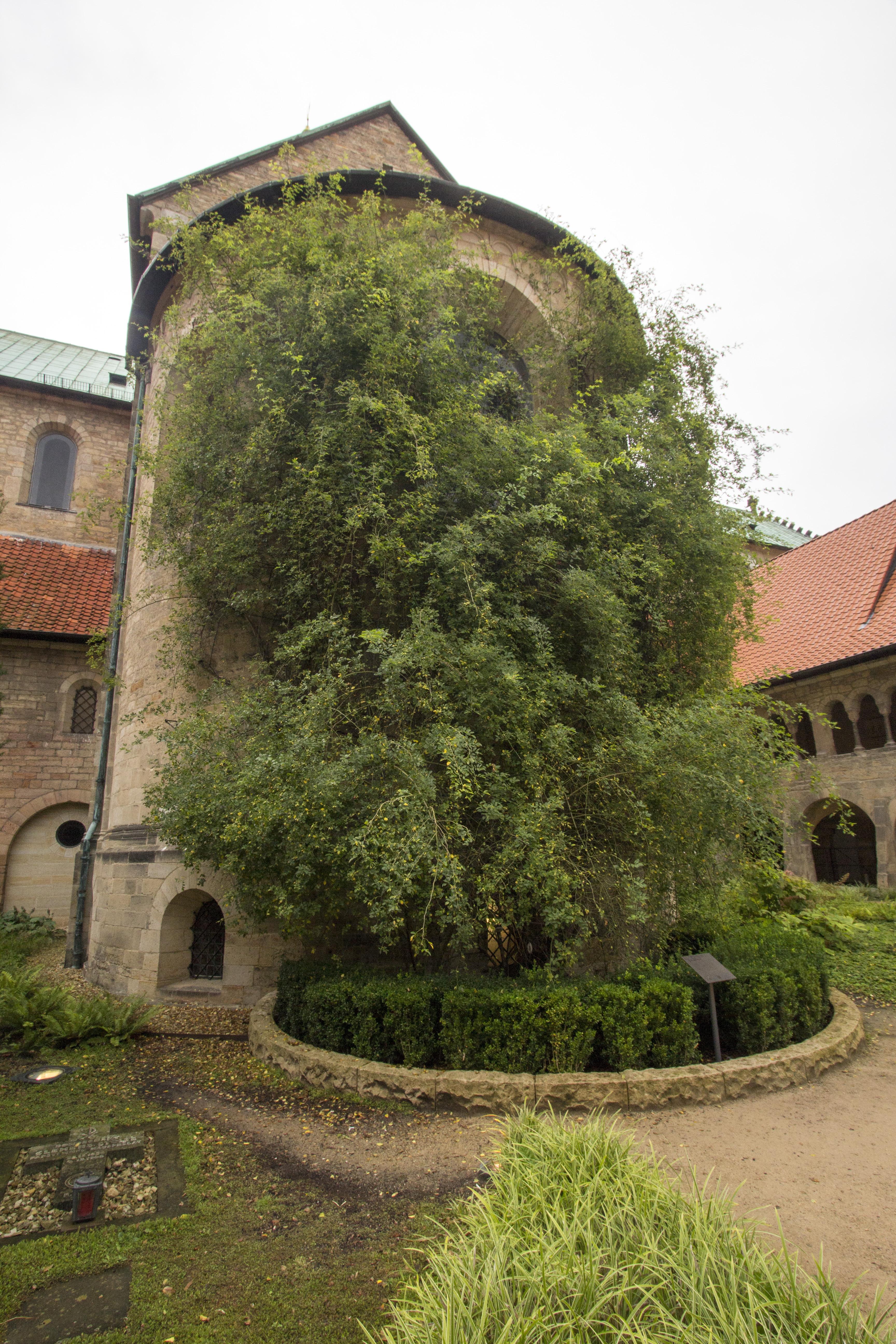 Hildesheim_62